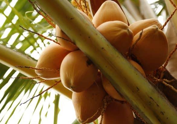 ácidos grasos coco