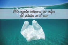 plastico mar nuevas especies