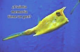 ¿Cuánta memoria tiene un pez?